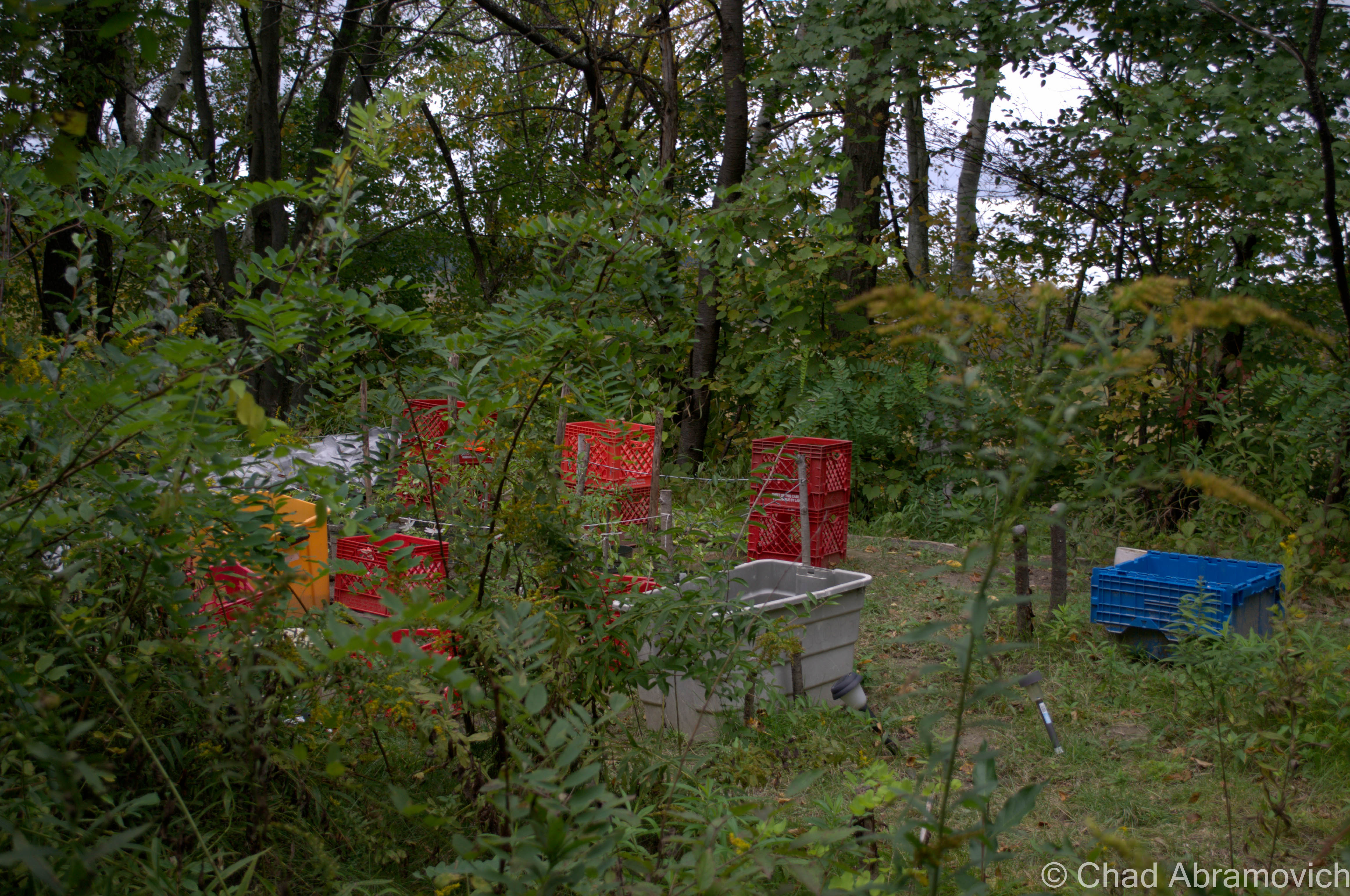 Following the path brought us right to the front door of the exact thing I expected and yet didn't want to see – a homeless camp. Tents, sleeping bags and shopping carts were stashed underneath thick foliage that clinged to my jacket.